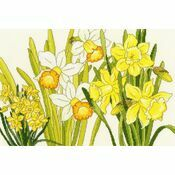 Daffodil Blooms Cross Stitch Kit