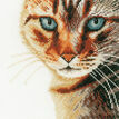 Cat Close-Up Cross Stitch Kit additional 1