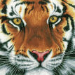 Tiger Cross Stitch Kit additional 1