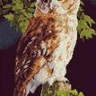 Owl On Fence Cross Stitch Kit additional 1
