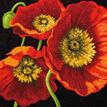 Red Poppy Trio Tapestry Kit additional 1