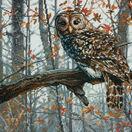 Wise Owl Cross Stitch Kit additional 1