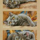 Max The Cat Cross Stitch Kit additional 1