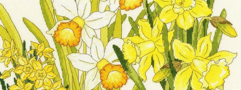 daffodil-blooms-xbd10