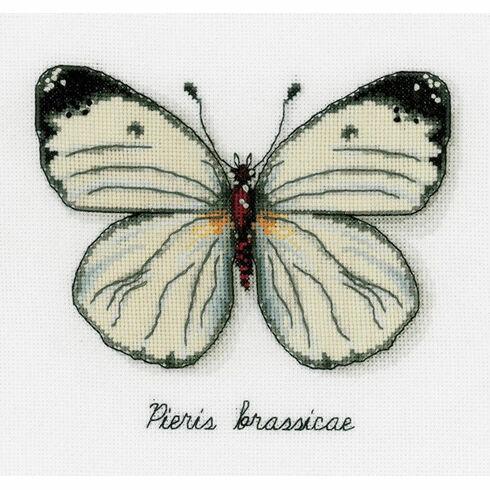 White Butterfly Study Cross Stitch Kit